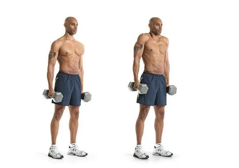 Dumbbell Shrugs for beginners