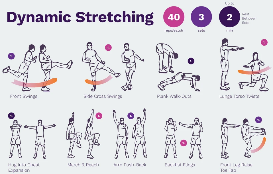 dynamic stretching exercise infographic