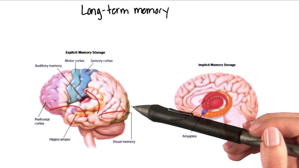long term memory in cognitive skills