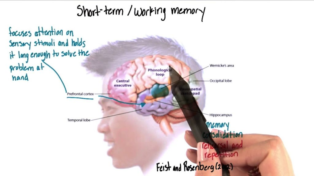 short term memory in cognitive skills